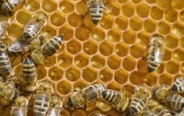 Mycket ojämn honungsproduktion i år