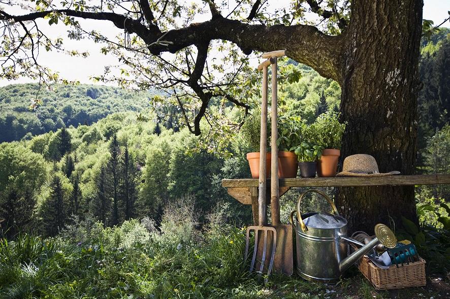 Njut av sommarens skörd hela vintern! -Så tar du enkelt tillvara det du odlar och plockar själv