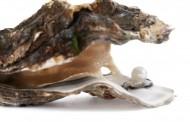Fantastiska ostron för finsmakare nu på var mans läpp
