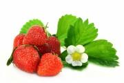 Svenska jordgubbar tidigare än någonsin