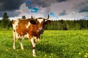 Färre än 4 000 mjölkbönder kvar