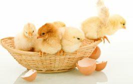 Vi äter dubbelt så mycket ägg under påskveckan