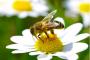 20 miljoner är vad en honungsburk borde kosta
